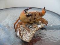Krabbe2.jpg